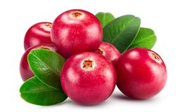 Экстракт ягод клюквы