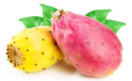 Экстракт плодов опунции индийской