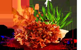 Комплекс морских водорослей SPA